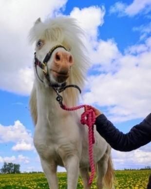 Rideterapi hest